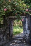 Όμορφα λουλούδια μέσα σε Hoa LU στοκ εικόνα