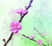 Όμορφα λουλούδια με τα φίλτρα χρώματος προστιθέμενα Στοκ Εικόνες