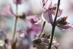 Όμορφα λουλούδια με τα φύλλα στην ηλιοφάνεια Στοκ φωτογραφία με δικαίωμα ελεύθερης χρήσης