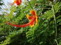 Όμορφα λουλούδια με την πυράκτωσή του Στοκ εικόνες με δικαίωμα ελεύθερης χρήσης