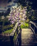Όμορφα λουλούδια πέρα από τη γέφυρα Στοκ Εικόνες