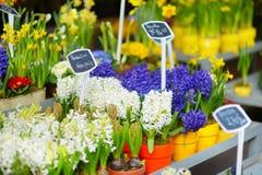 Όμορφα λουλούδια που πωλούνται στο υπαίθριο ανθοπωλείο Στοκ Εικόνες