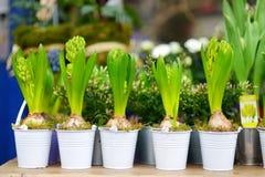 Όμορφα λουλούδια που πωλούνται στο υπαίθριο ανθοπωλείο Στοκ φωτογραφία με δικαίωμα ελεύθερης χρήσης