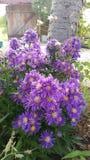 Όμορφα λουλούδια σε Kozarevec Στοκ εικόνα με δικαίωμα ελεύθερης χρήσης
