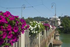 Όμορφα λουλούδια στη γέφυρα πέρα από Po τον ποταμό στο Τορίνο Στοκ φωτογραφίες με δικαίωμα ελεύθερης χρήσης