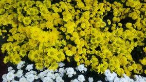 Όμορφα λουλούδια στον κήπο κάτω από το χειμερινό ήλιο στοκ εικόνα με δικαίωμα ελεύθερης χρήσης
