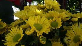 Όμορφα λουλούδια στον κήπο κάτω από το χειμερινό ήλιο στοκ φωτογραφία με δικαίωμα ελεύθερης χρήσης