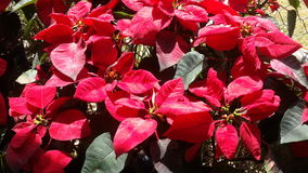 Όμορφα λουλούδια στον κήπο κάτω από το χειμερινό ήλιο στοκ φωτογραφία