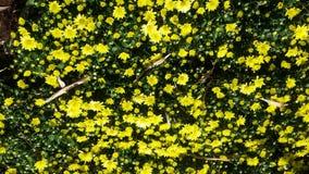Όμορφα λουλούδια στον κήπο κάτω από το χειμερινό ήλιο στοκ φωτογραφίες με δικαίωμα ελεύθερης χρήσης
