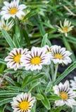 Όμορφα λουλούδια στον κήπο στοκ φωτογραφίες με δικαίωμα ελεύθερης χρήσης