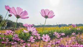 Όμορφα λουλούδια στον κήπο Στοκ εικόνα με δικαίωμα ελεύθερης χρήσης
