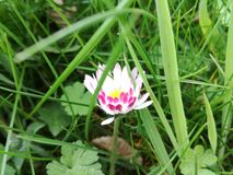 Όμορφα λουλούδια στον κήπο Στοκ Εικόνα