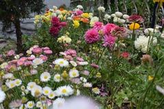 Όμορφα λουλούδια στον κήπο Στοκ Φωτογραφία