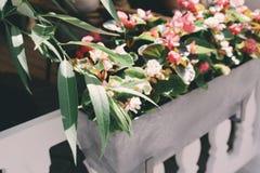 Όμορφα λουλούδια στον καφέ Στοκ φωτογραφίες με δικαίωμα ελεύθερης χρήσης