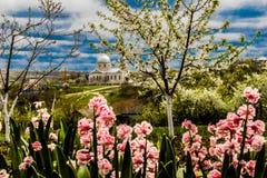 Όμορφα λουλούδια συμπαθώ τα fowers Στοκ Εικόνες