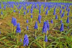 Όμορφα λουλούδια φυσικά Στοκ Εικόνες