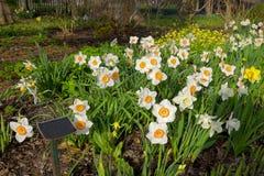 Όμορφα λουλούδια φυσικά Στοκ εικόνες με δικαίωμα ελεύθερης χρήσης