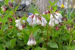 Όμορφα λουλούδια φυσικά Στοκ Φωτογραφίες