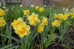Όμορφα λουλούδια φυσικά Στοκ φωτογραφία με δικαίωμα ελεύθερης χρήσης