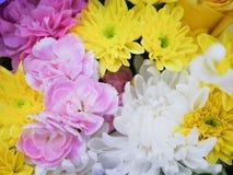 Όμορφα λουλούδια χρώματος κομψότητας Στοκ εικόνα με δικαίωμα ελεύθερης χρήσης