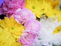 Όμορφα λουλούδια χρώματος κομψότητας Στοκ Φωτογραφίες
