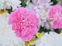 Όμορφα λουλούδια χρώματος κομψότητας Στοκ φωτογραφία με δικαίωμα ελεύθερης χρήσης