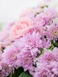 Όμορφα λουλούδια χρώματος κρητιδογραφιών κομψότητας ρόδινα Στοκ φωτογραφία με δικαίωμα ελεύθερης χρήσης