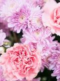 Όμορφα λουλούδια χρώματος κρητιδογραφιών κομψότητας ρόδινα Στοκ Εικόνες