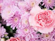 Όμορφα λουλούδια χρώματος κρητιδογραφιών κομψότητας ρόδινα Στοκ φωτογραφίες με δικαίωμα ελεύθερης χρήσης