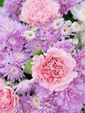 Όμορφα λουλούδια χρώματος κρητιδογραφιών κομψότητας ρόδινα Στοκ Φωτογραφίες