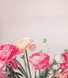 Όμορφα λουλούδια χρώματος κρητιδογραφιών που ανθίζουν στο ελαφρύ υπόβαθρο, floral σύνορα Στοκ φωτογραφίες με δικαίωμα ελεύθερης χρήσης
