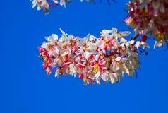Όμορφα λουλούδια χρώματος με το μπλε ουρανό Στοκ φωτογραφία με δικαίωμα ελεύθερης χρήσης