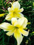 όμορφα λουλούδια Στοκ εικόνες με δικαίωμα ελεύθερης χρήσης