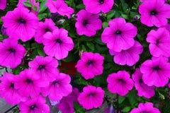 όμορφα λουλούδια Στοκ εικόνα με δικαίωμα ελεύθερης χρήσης