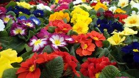 όμορφα λουλούδια Στοκ Εικόνα