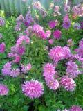 όμορφα λουλούδια Στοκ Φωτογραφίες