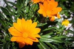 όμορφα λουλούδια Στοκ φωτογραφίες με δικαίωμα ελεύθερης χρήσης