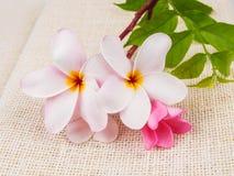 Όμορφα λουλούδια plumaria στη σύσταση σάκων Στοκ Εικόνες