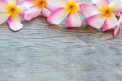Όμορφα λουλούδια Plumeria (Frangipani) στο ξύλινο υπόβαθρο Στοκ Φωτογραφίες
