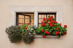 Όμορφα παλαιά ευρωπαϊκά ξύλινα παράθυρα με τα κάγκελα σιδήρου που διακοσμούνται με τα λουλούδια στοκ φωτογραφία με δικαίωμα ελεύθερης χρήσης