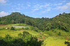 Όμορφα πεζούλια ρυζιού στην Ταϊλάνδη Στοκ Φωτογραφία