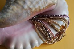 Όμορφα πολύχρωμα μαργαριτάρια σε ένα μεγάλο ρόδινο ωκεάνειο κοχύλι στοκ εικόνες