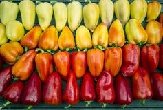 όμορφα πολύχρωμα πιπέρια Στοκ φωτογραφία με δικαίωμα ελεύθερης χρήσης
