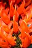 Όμορφα πορτοκαλιά λουλούδια Στοκ φωτογραφία με δικαίωμα ελεύθερης χρήσης