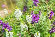 Όμορφα πορφυρά λουλούδια στο βουνό Στοκ φωτογραφία με δικαίωμα ελεύθερης χρήσης