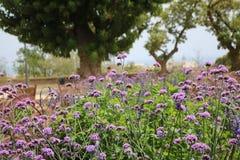 Όμορφα πορφυρά λουλούδια στο καθαρό αέρα Στοκ φωτογραφία με δικαίωμα ελεύθερης χρήσης