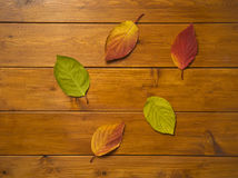 Όμορφα πολύχρωμα φύλλα στους ξύλινους πίνακες Στοκ Φωτογραφία