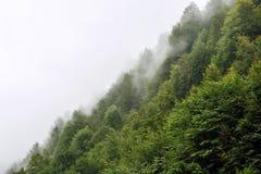 Όμορφα πράσινα δέντρα σε έναν λόφο στην ομίχλη στα βουνά του Sochi στοκ εικόνες