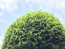 Όμορφα πράσινα δέντρα στο υπόβαθρο ουρανού Στοκ Εικόνες