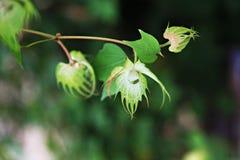 Όμορφα πράσινα φύλλα στον κήπο φύσης Στοκ φωτογραφία με δικαίωμα ελεύθερης χρήσης